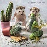 kitchen hedgehogs 3: