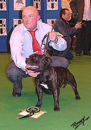 Grandísimo perro y TOP CC de la raza in England. Padre de Christaff Countess Camila, mi perrita. Os presento a CH. Valglo Casanova at Crossguns
