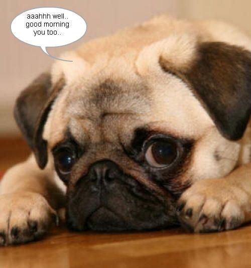 Image Result For Pug Good Morning Meme Its Friday Carlino Animali Carini Animali