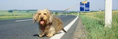 Estate 2016 con meno cani abbandonati: monitoraggio Aidaa su 100 canili italiani…