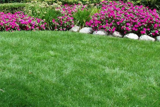 Tall Fescue Grass for Lawn. These types of fescue have finer blades and a softer texture than tall fescue. Fine fescue tolerates cold and shade a little...