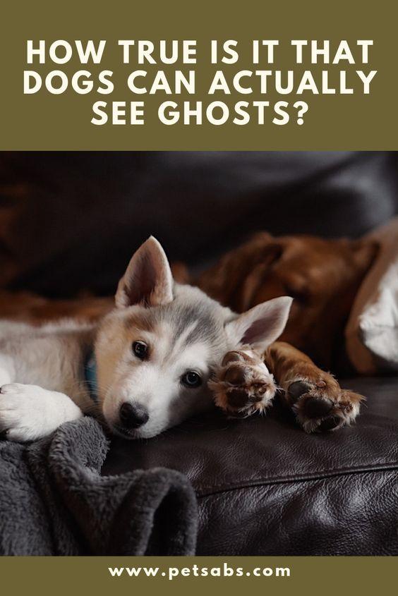 Kunnen honden en katten geesten zien?