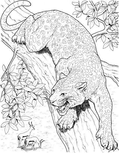 Malbuchseiten Von Baumen Malvorlagen Leopard Roars On Tree Ausmalbilder Super Farbe Church Ausmalbilde Ausmalen Ausmalbilder Mandala Malvorlagen
