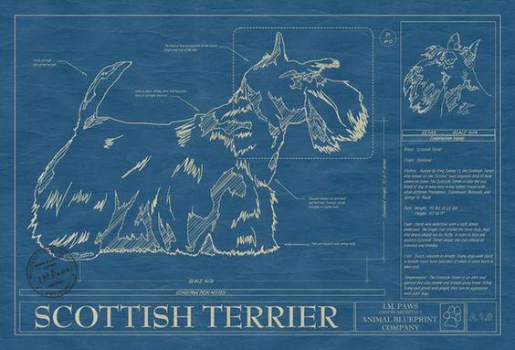 Dog Print - Scottish Terrier