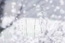 A little sprinkle of Winter.