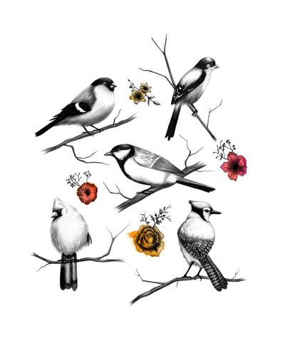 BIRDS & FLOWERS  by Amanda Mocci