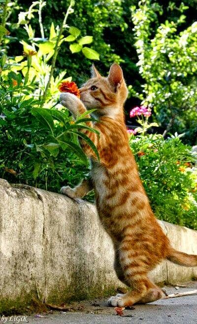 -m-- Flowers smell so good. !!!: