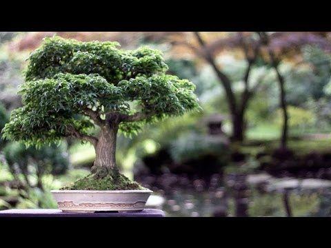 http://youtu.be/b5dexpeO-l4 Película de hermosos bonsai.