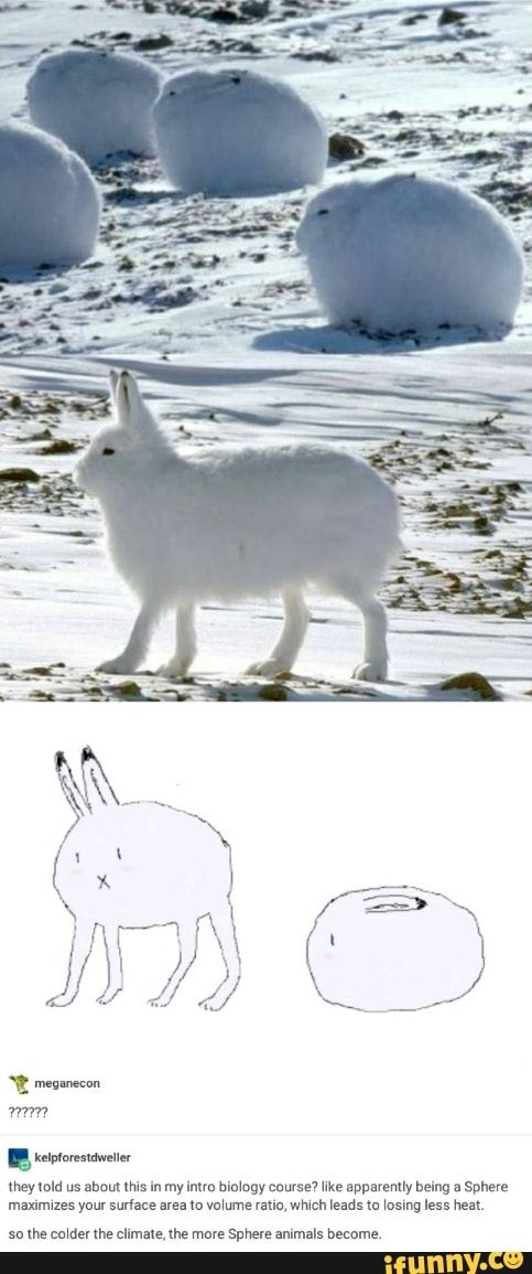 THAT IS SO WEIRD LIKE ITS A BUNNY WITH DOG LEGS