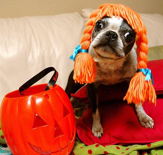 Halloween Safety For Cats & Dogs: Dont Worry About the Chocolate