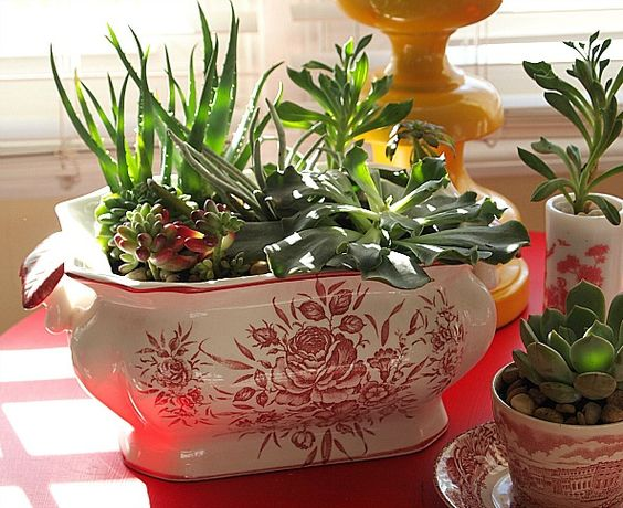 Indoor Succulents, Dish Garden And Succulents On Pinterest