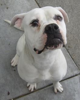 SOMEONE PLEASE SAVE THIS BEAUTIFUL DOG! URGENT!!!! RESCUE NEEDED ...