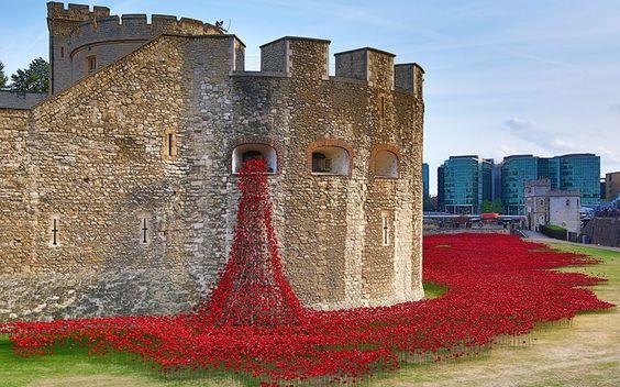 一次大戰百年紀念 倫敦塔 80 萬朵陶瓷罌粟花海