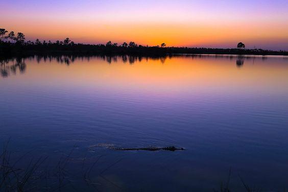 Marjory Stoneman Douglas Wilderness // Florida