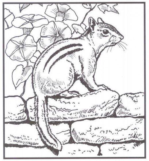 Perfect Pork Tenderloin Recipe Food Com Recipe In 2020 Coloring Pages Nature Coloring Books Animal Coloring Books