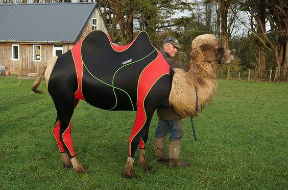 habits-pour-les-courses-de-chameaux