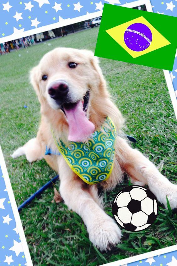 Para estrear essa galeria, nada mais justo de colocar uma foto do meu Tommy torcendo pelo nosso Brasil na Copa do Mundo de 2014.