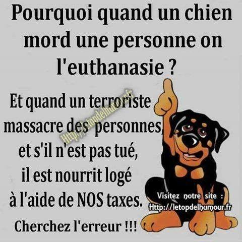 Drôle De Monde Citation Animaux Dictons Et Citations Et Chien