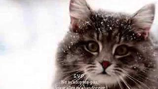 le triste noel du chat - YouTube