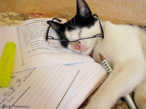 Dando conta das matérias? #estudos #concursos #concurseiros #animal #pet #gato #estudante #cat