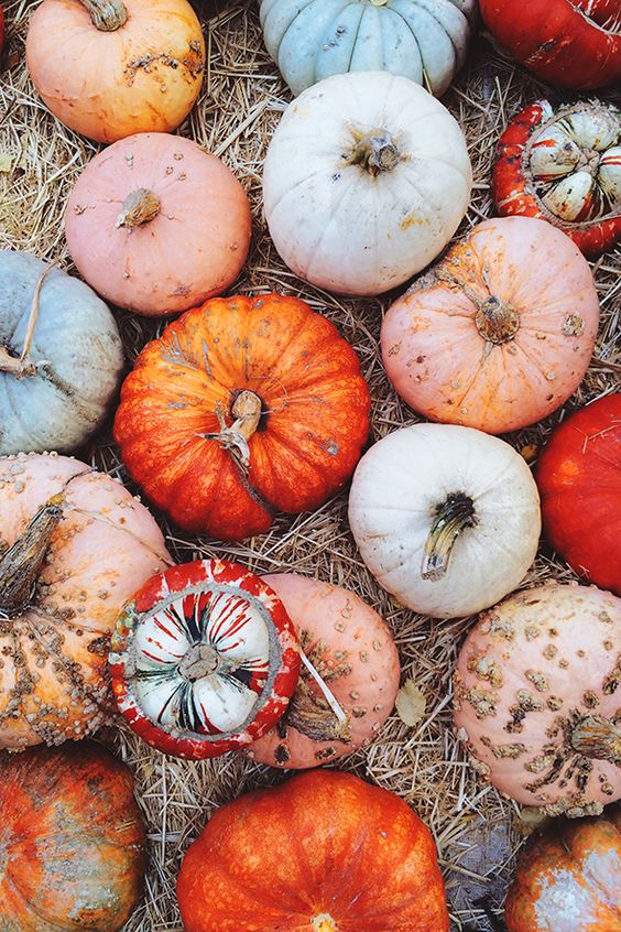 Multi-colored pumpkins: