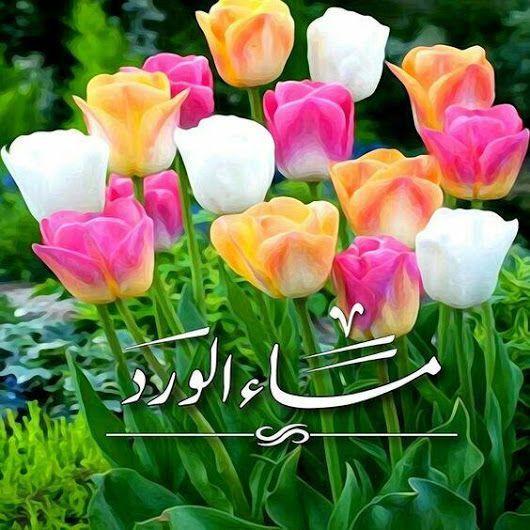 صور مساء الورد صور ورد وزهور مكتوب عليها مساء الورد والياسمين صور عالية الجودة Good Morning Images Flowers Good Morning Flowers Good Morning Flowers Gif