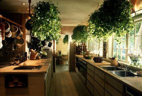 ¡Amo las plantas en la cocina!