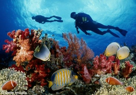 Scuba Diving on the Great Barrier Reef - Australia
