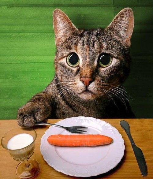 diet :(