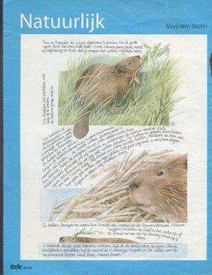 50 different illustrations Marjolein bastin Natuurlijk Nature (12/08/2011)