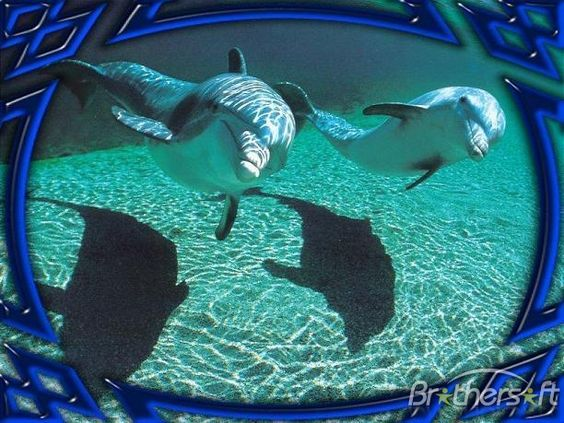 screensavers free downloads | Download Free Dolphins Underwater Animated Screensaver, Dolphins ...