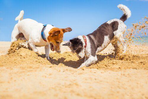 Juegos De Inteligencia Para Perros My Animals Perros De Compañia Animal Doméstico Perros