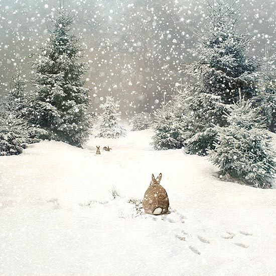 Bunny Woods - christmas card design by Jane Crowther for Bug Art greeting cards. Original Rabbit photo by Becca Fowler.