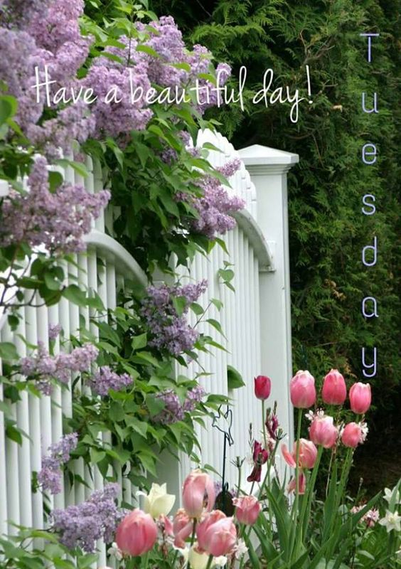 Have a beautiful Tuesday! ♥:
