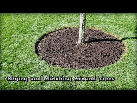 Edging And Mulching Around Trees How To Redefine An Edge Youtube Landscaping Around Trees Mulch Landscaping Landscaping Around House