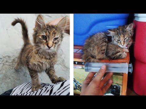 Kitten Found Under Street Lamp Stops Crying And Starts Purring Youtube Cute Kitten Gif Kittens Kittens Cutest