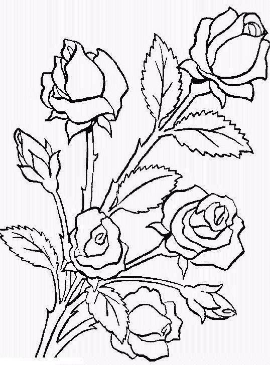 Roza Rozy Na Kustu Raskraski Cvety Cvetochnye Raskraski Narisovat Cvety Raskraski