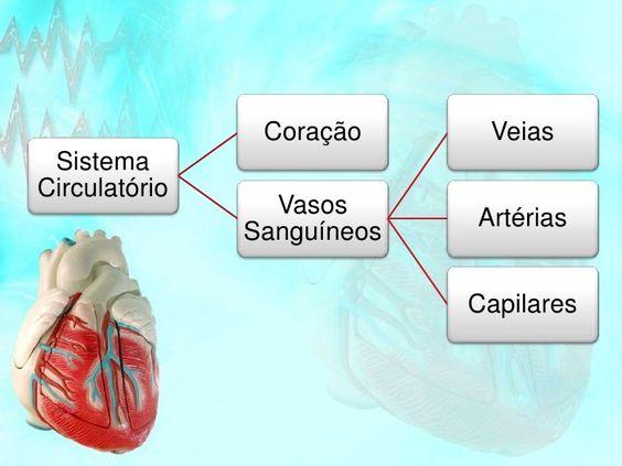Sistema Circulatorio Sistema Circulatorio Neurociencia E
