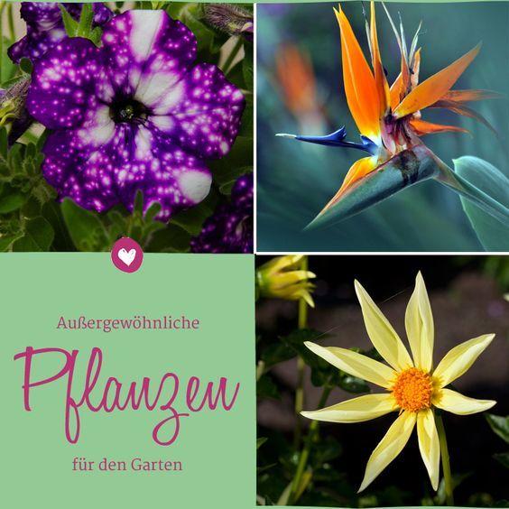 Petunie Night Sky Co Aussergewohnliche Bluten Pflanzen Petunien Garten