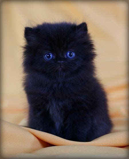 Persian: Top 5 Friendliest Cat Breeds This breed is one of the oldest cat breeds which are known to man and best suited for homes and for kids. One some lists this breed is number one on the friendliest-cat-list.source: