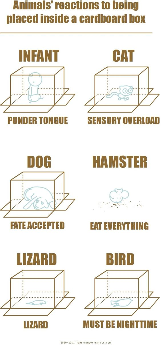 Animals' reactions to being placed inside a cardboard box