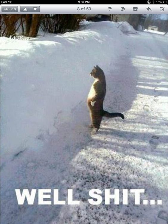 Cat and huge snowfall pic: