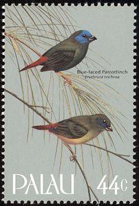 Blue-faced Parrotfinch (Erythrura tichroa)