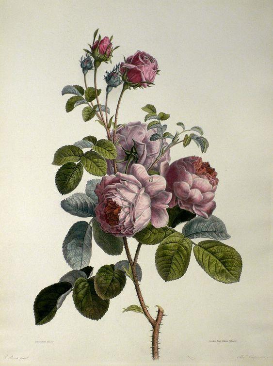 damaszener rose pancrace bessa kupferstich punktstich aquarelliert 1808 1900 von. Black Bedroom Furniture Sets. Home Design Ideas