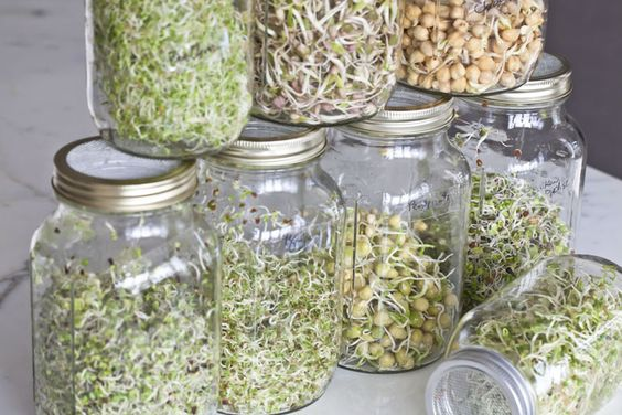 how to grow sprouts in mason jars: