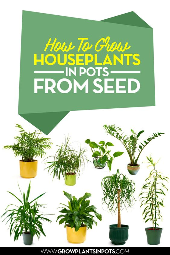 How To Grow Houseplants In Pots From Seed