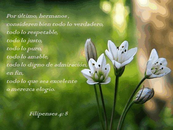 Versiculos De La Biblia De Animo: Mi Inspiración Y Apoyo...flores... Filipenses 4: 8