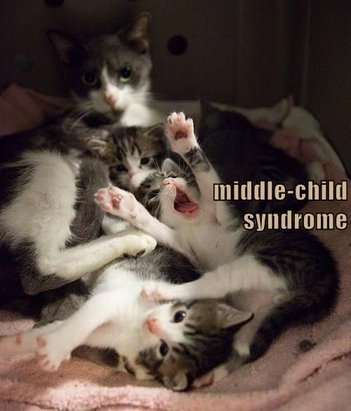Top 25 Memes Of The Week Cheezburger Users Edition 85 Middle Child Syndrome Funny Cats Funny Cat Pictures