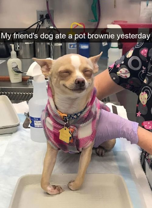 47 Funny Dogs To Brighten Up Your Day Funny Animal Jokes Funny Pictures Funny Dog Memes