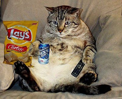 fat and happy kitty watching 'big bang' marathon while sitting: